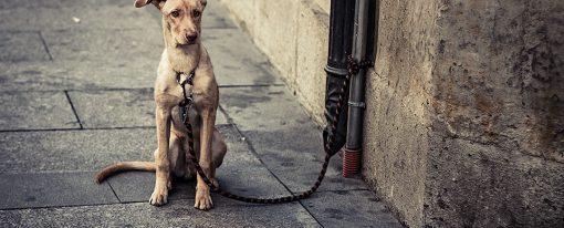 Perros: Problemas y Oportunidades