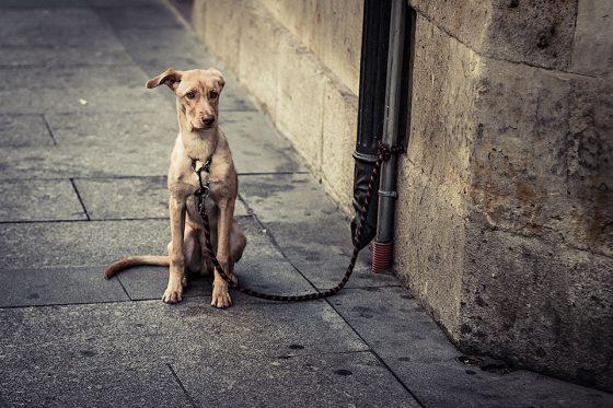 perro por Darco TT