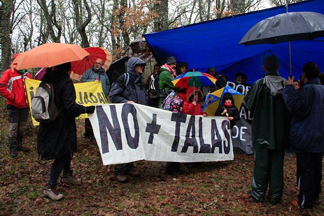 Jornada de protesta contra la tala de robles centenarios en la Genestosa