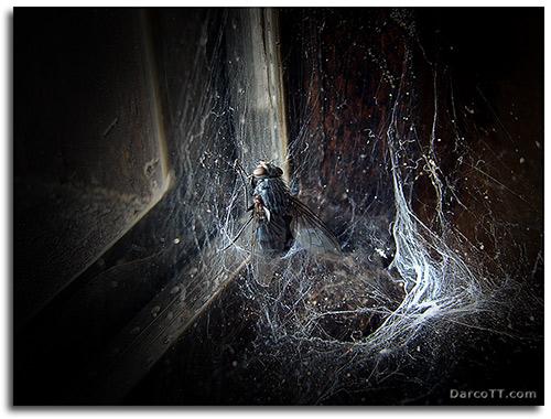 Miedo / Fear - Foto de DarcoTT
