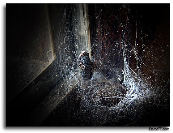Tormes, foto de Darco TT