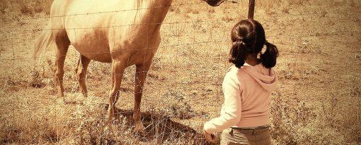 Salamanca, ciudad amiga de los equinos