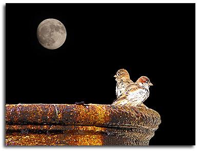 Luna y pajarillos