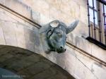 toro sin cuerno